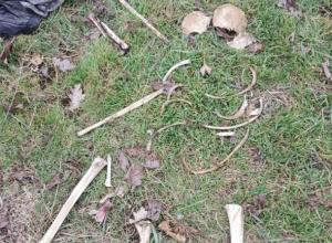 В Краснодарском крае нашли останки убитого полгода назад мужчины