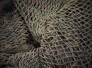 На Кубани рыбаки поймали необычное животное