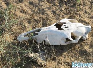 В Ейске на пляж сползает содержимое ящурного скотомогильника
