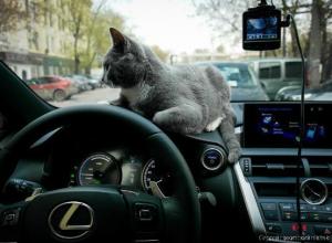 Не хотел, но «подарил» «Лексус» автосалон в Краснодаре