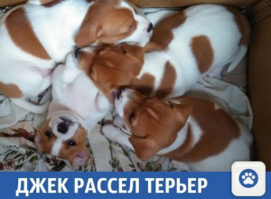 Умилительные щенки продаются в Краснодаре