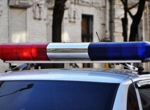 Мужчина в Геленджике мучил и убивал щенков