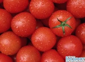 На Кубани была задержана партия турецких томатов