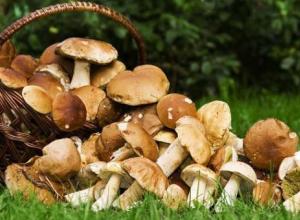 В Новороссийске приступят к борьбе с незаконной торговлей грибами