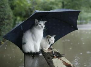 В Сочи возможен дождь, а в Краснодаре нет