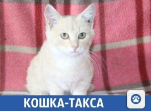 Плюшевый котенок ищет новый дом