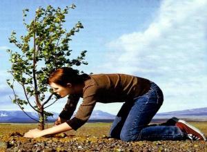 В Сочи бесплатно раздадут жителям города саженцы деревьев