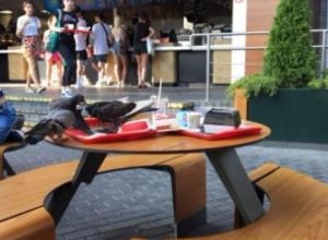 «Еда и голуби»: сочинцы возмущены «слежением за чистотой» в местном кафе