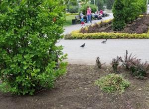 Вместо сорняков цветы после жалобы посадят в Краснодаре
