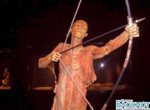 В столице Кубани открылась скандальная анатомическая выставка