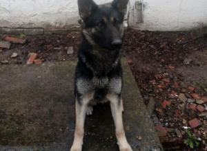 Промокшую и истощенную собаку нашел и вернул хозяевам полицейский в Калининском районе