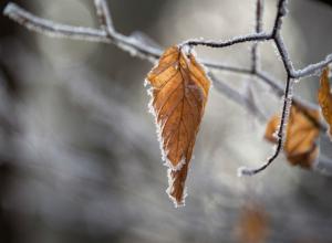 МЧС предупреждает жителей Кубани о налипании мокрого снега
