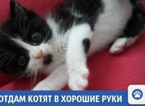 Веселые и активные котята ищут дом в Краснодаре