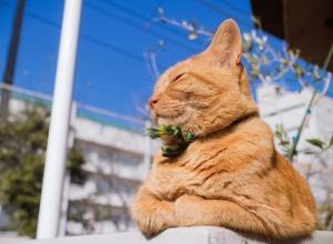 На Кубани солнечно, а в сравнении с Сочи Ташкент «отдыхает»