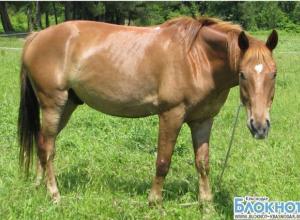 В Геленджике украли лошадей из спортивной казачьей школы