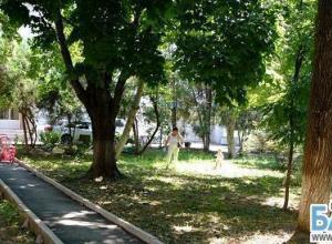 Жители Краснодара вновь пытаются сохранить деревья