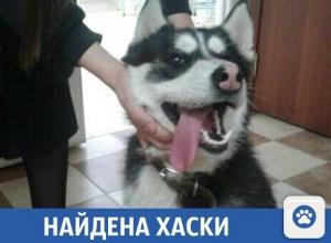 Потерявшаяся собака в Краснодаре ищет своего хозяина