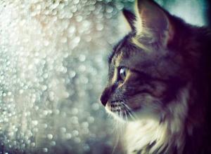На Кубани весь день будут лить дожди