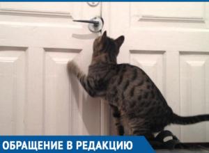 «У него уже нет сил мяукать!» - в Краснодаре владельцы обрекли кота на долгую и мучительную смерть