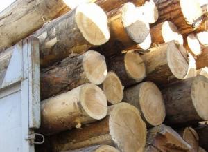 Жители Кубани незаконно вырубили более ста деревьев