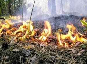 Пожар под Геленджиком тушили 12 часов
