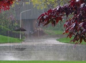 «Приплыли!»: На Кубань возвращаются грозы и дожди