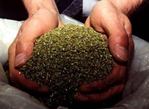 Житель кубанской станицы спрятал в сарае 1,3 кг марихуаны