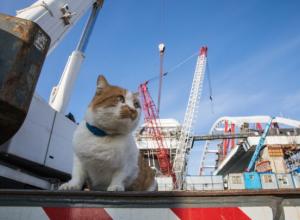 Название моста через Керченский пролив и «первооткрыватель-кот»: Краснодарский край узнал все