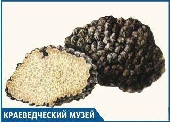 Трюфелями, которые растут в Краснодарском крае, уже не удивишь