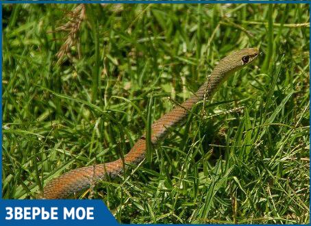 Сочинцев шокировали появившиеся на улицах в ноябре змеи