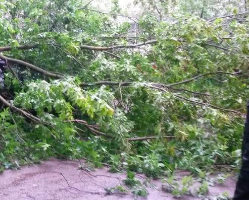 В Краснодаре дерево рухнуло на девушку