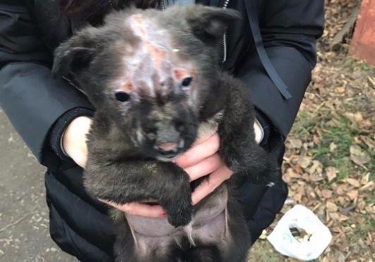 Щенка, которого облили бензином и подожгли, приютила семья из Краснодара
