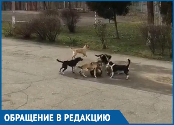 «Наши дети в опасности»: стая бродячих собак напала на школьников в Краснодаре