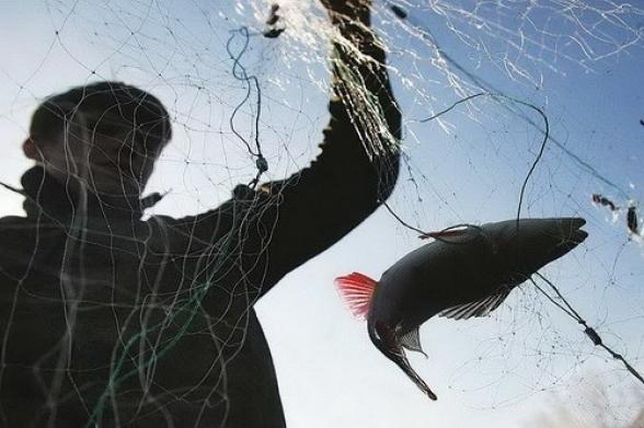 «И рыбку съесть, и ножки не замочить»: кубанские браконьеры поймали рыбы на 135 тысяч рублей