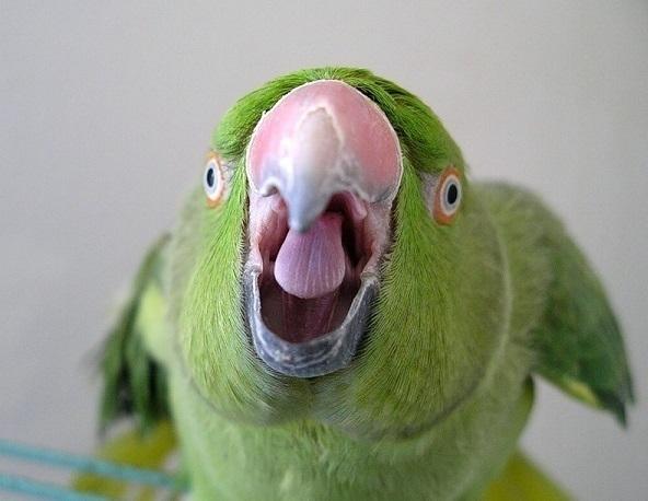 В Новороссийске попугай съел полруки у мертвого хозяина
