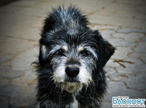 Водителя «скорой помощи» будут судить в Краснодаре за убийство собаки