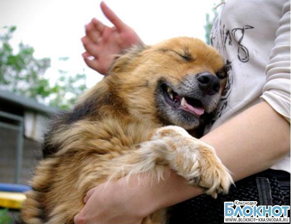 Десять бездомных собак из Сочи нашли хозяев в США