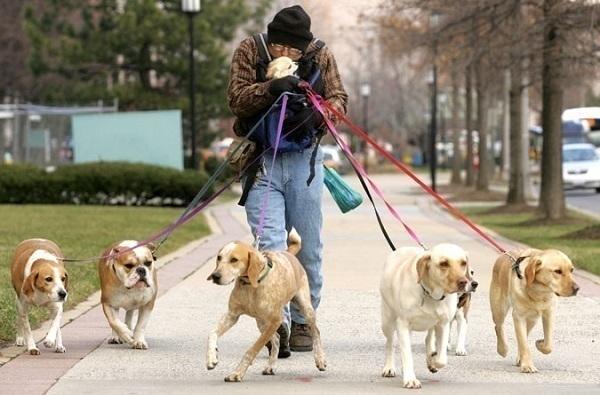 В Сочи разработали новые правила по выгулу собак