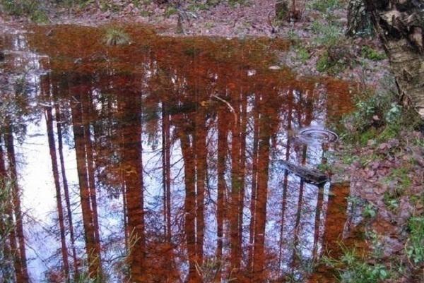 В Новороссийске прошел африканский «ржавый» дождь