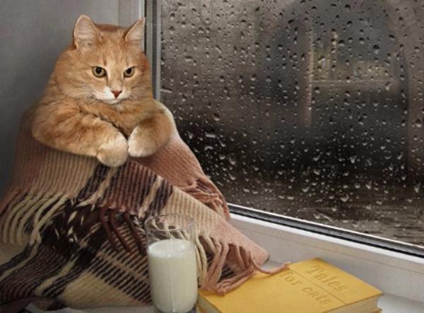 «Бархатному сезону» на Кубани конец: в воскресенье похолодает и пройдут дожди