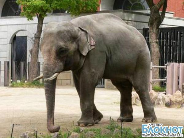 Краснодарцы объявили о сборе средств на покупку слона
