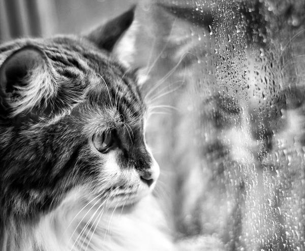 Выходные испорчены: погода «зарядила дожди» на Кубани