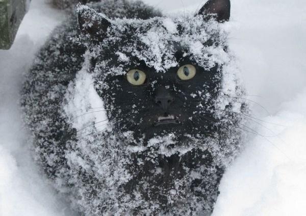 В Краснодаре ожидается усиление снега и гололед