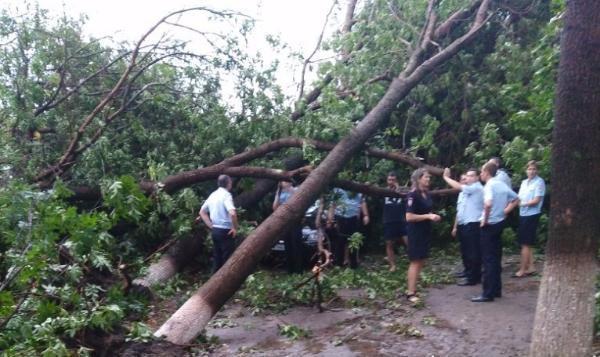 ВАрмавире сильный ветер повалил деревья и сломал ЛЭП