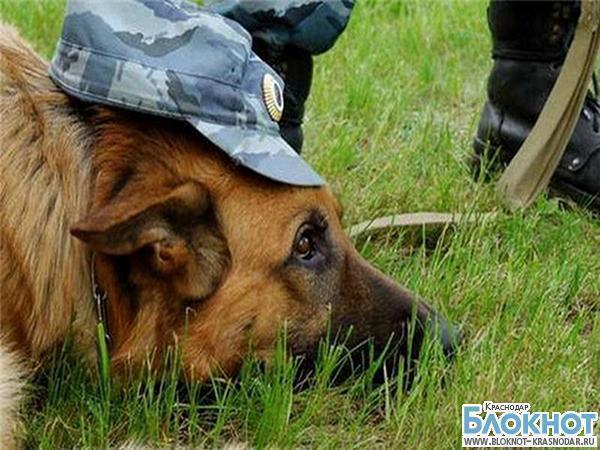 В Отрадненском районе собака выследила грабителя