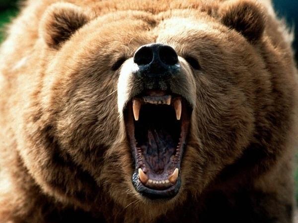 ВСочи туристка угодила медведю под горячую руку