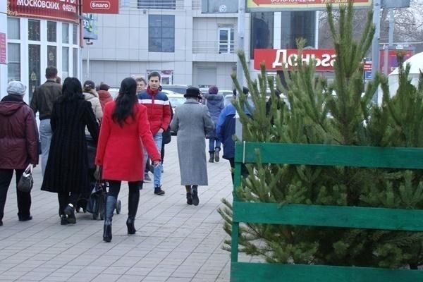 Где в Краснодаре купить новогоднюю ёлку и игрушки