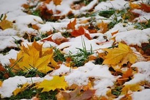 На Кубань придут заморозки и мокрый снег