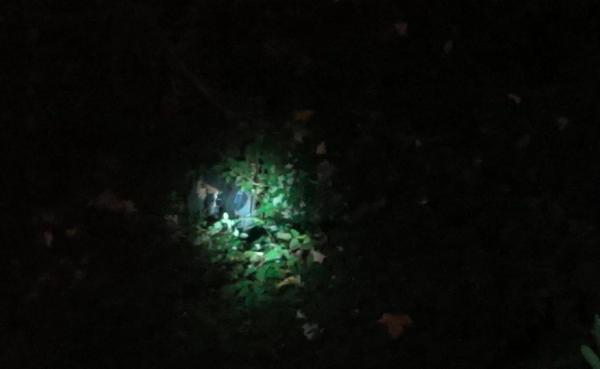 В Сочи парень упал со Светлановского моста и чудом остался жив (ВИДЕО)