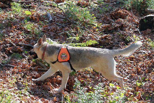 Потерявшегося в горах пенсионера с собакой ищут кинологи